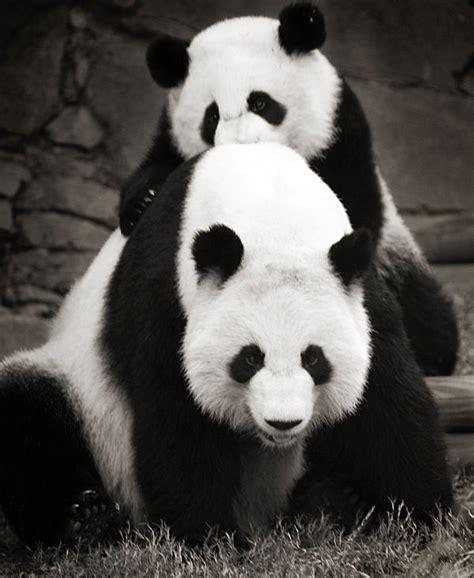 imagenes en blanco de animales imagenes de animales en blanco y negro taringa