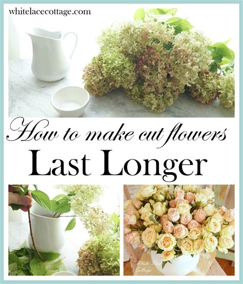 how to make cut flowers last longer white lace cottage