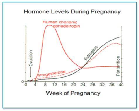 hormone swings about pregnancy hormones