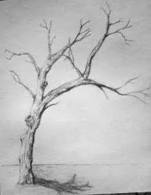 Y Tree Drawing by Best 25 Tree Drawings Ideas On