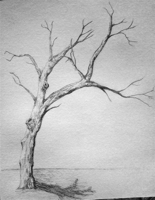 sketched tree best 25 tree drawings ideas on