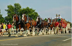 Image result for Budweiser: Clydesdales in new york