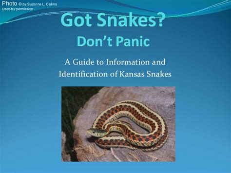 a true and concise history of the ku klux klan in their own words books your kansas snakes