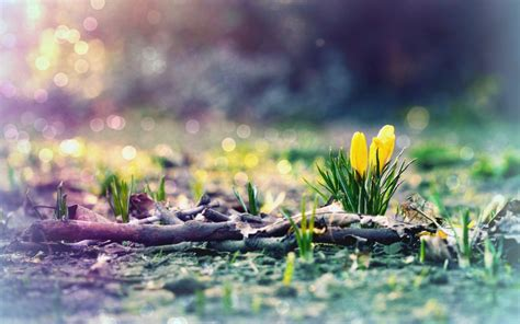 free wallpaper early spring early spring wallpapers wallpapersafari
