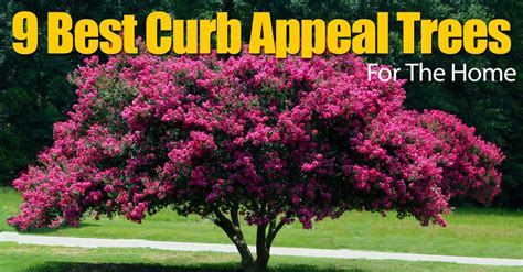 curb appeal plants 9 best curb appeal trees for the home