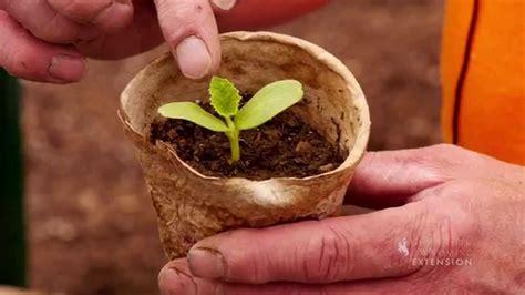 planting giant pumpkin seed wyogiants youtube