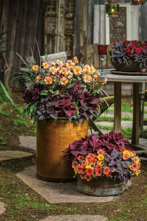 fall container gardens 17 best ideas about fall container gardening on