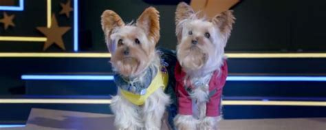 pup better 2gether pup better 2gether cast images the voice