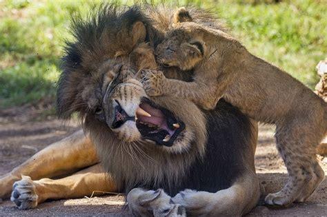 day care san diego day care at san diego zoo safari park zooborns