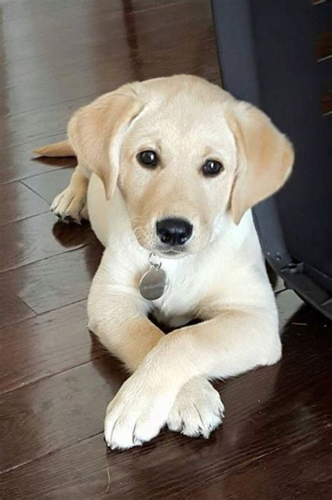 name for puppies best 25 pictures of puppies ideas on puppies with babies picture of