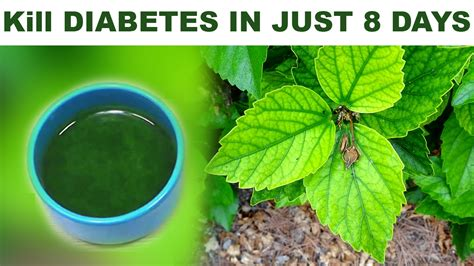 1 fruit kills diabetes kill diabetes forever in just 8 days easy and faster home