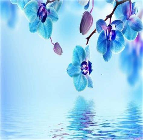 imagenes para fondos de pantalla hermosas imagenes con flores para fondo de pantalla y para tu
