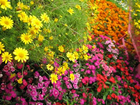 flowers garden photos how to grow garden flowers successfully