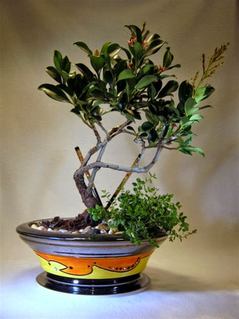 handmade ceramic bonsai pots  matthew kennedy