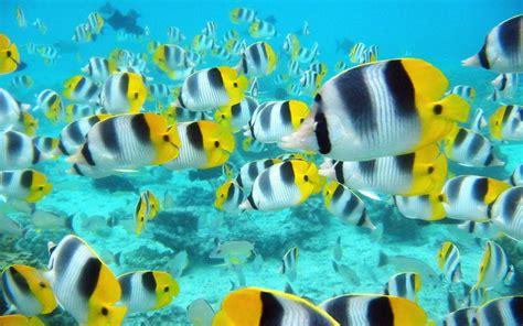imagenes movibles wallpaper fondos de pantallas movibles de peces imagui