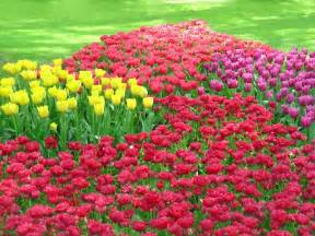 Bulb flower gardens grower direct fresh cut flowers presents