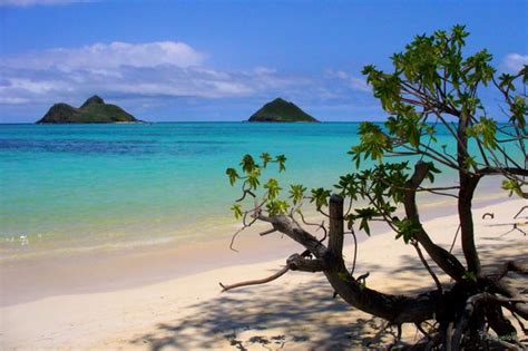 top world pic hawaii beach best beaches in the world welsh beach rhossili is named