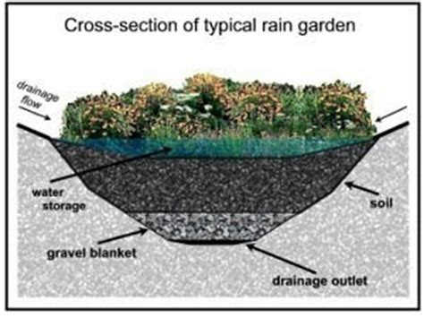 rain garden section rain gardens rockland camden knox courier gazette