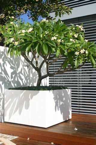 extra large planters frangipani love  idea large