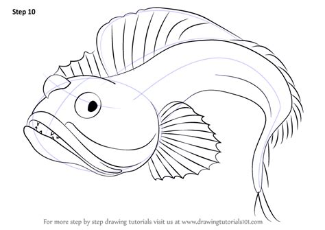 learn   draw  sarcastic fringehead fishes step