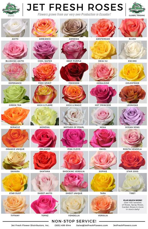 the 25 best rose color meanings ideas on pinterest