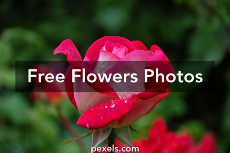 flower free flowers photos free flowers stock photos google images flowers free free clipart