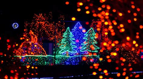 Point Defiance Zoo Coupons 2017 2018 Best Cars Reviews Point Defiance Zoo Lights Coupon