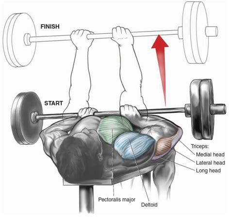 reverse bench press benefits reverse grip incline bench press benefits benches