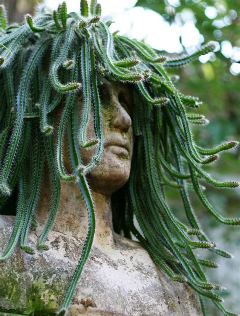 medusa planter head planters in stone concrete and cement