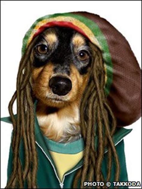 dogs with dreads with dreadlocks