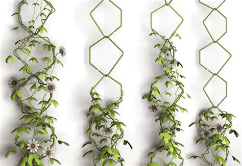 Indoor Vine Plant Fr 233 D 233 Ric Malphettes Trellis Vertical Garden