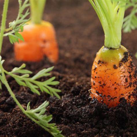 topsoil vegetable garden vegetable soil