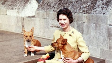 how many corgis does the queen have queen elizabeth ii and her corgis photos huffpost