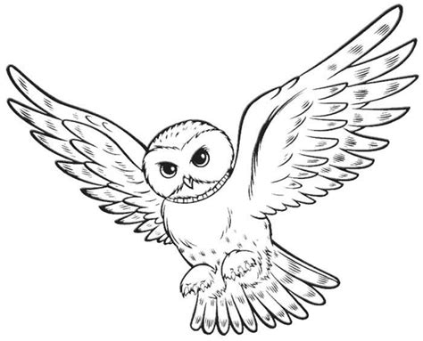harry potter owl coloring pages owl quot harry potter quot animal coloring pages
