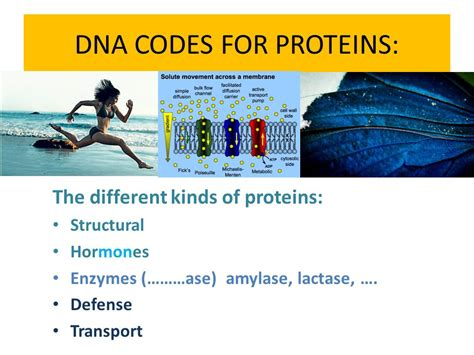 r protein code what are the monomers of each polymer ppt