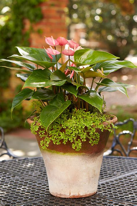 creative containers for gardening creative container gardening costa farms