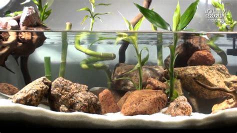 aquascape setup seriesaqua terrarium bamboo style animalia kingdom show youtube