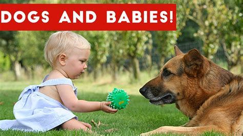 cute dogs and adorable babies compilation youtube cutest dogs adorable baby video compilation october 2016
