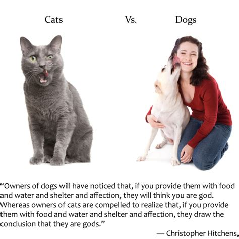kittens vs puppies cats vs dogs thedogtrainingsecret