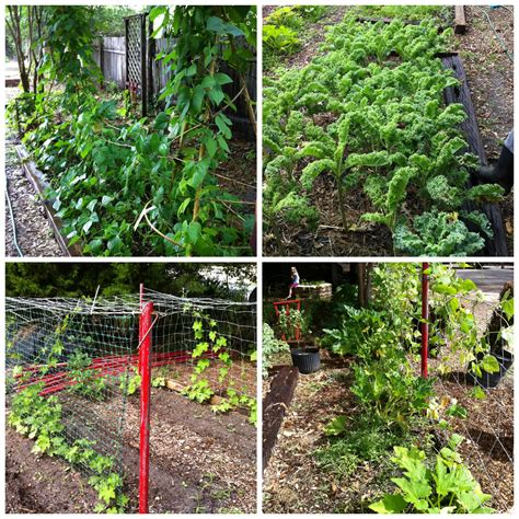eco backyard farm naturally cool wednesday nature scapes ecological farm
