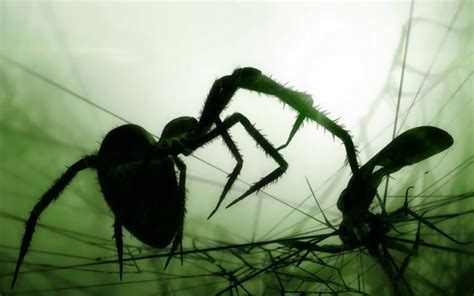 the spider and the fly a writer a murderer and a story of obsession books spider and the fly 3 by welshdragon on deviantart
