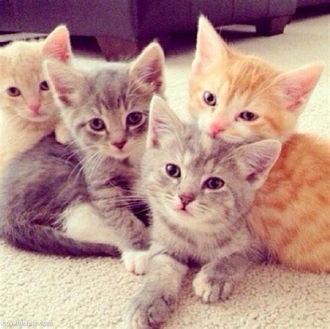 kitten  web page