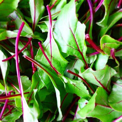 b h vegetables summer csa begins june 3rd b h organic produce llc