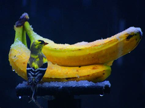 black bananas wallpaper banana hd wallpapers free banana hd wallpapers