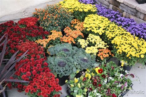 planting flowers for fall fall flower bed ideas photograph let s do this planting