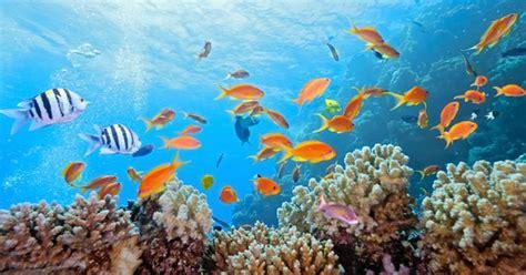 dive gratis diving bunaken manado two fish divers