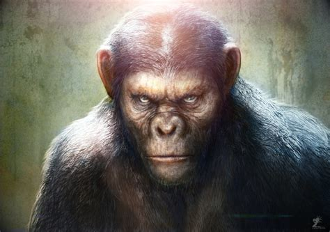 gambar monyet lengkap