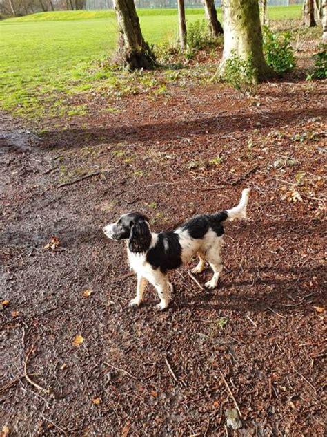 dog walking  leeds   prices  petbacker