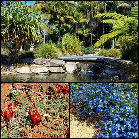 australian botanic garden mt annan sydney