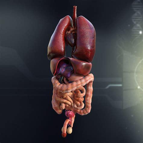 3d Printable Organs diagram of human organs 3d and skeleton anatomy